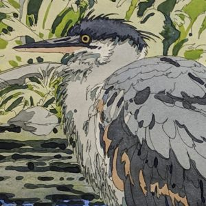 Neil Welliver - Immature Great Blue Heron