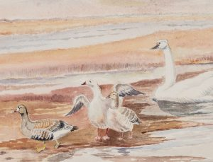 Unknown Artist - Seagull and Ducks