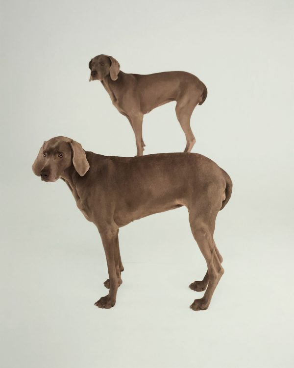 William Wegman - Dog and Pony